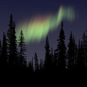 Aurora Borealis by Mark Taylor