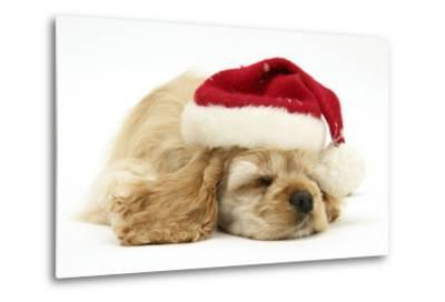 Buff American Cocker Spaniel Puppy, China, 10 Weeks Old, Asleep Wearing a Father Christmas Hat