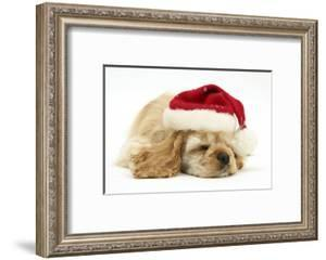 Buff American Cocker Spaniel Puppy, China, 10 Weeks Old, Asleep Wearing a Father Christmas Hat by Mark Taylor