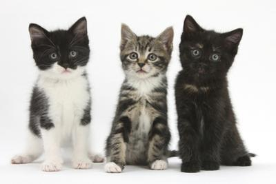Portraits of Three Kittens by Mark Taylor