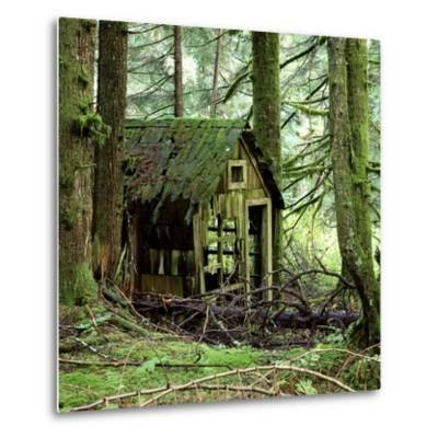 Rotting Wooden Shed Covered in Moss, Washington State, Usa