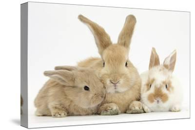 Sandy Rabbit and Two Babies