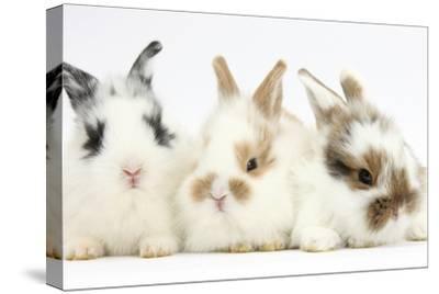Three Cute Baby Bunnies Sitting Together