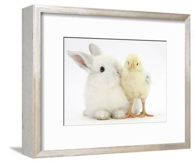 White Rabbit and Yellow Bantam Chick