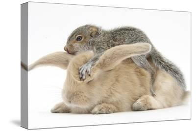 Young Grey Squirrel and Sandy Rabbit