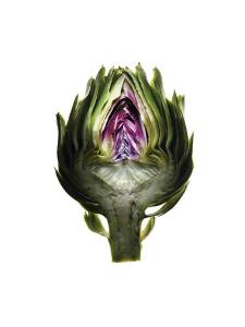 A halved artichoke by Mark Thiessen