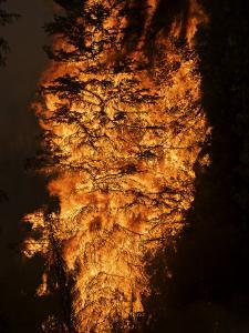 Six hundred acres of forest are destroyed by wildfire flames by Mark Thiessen