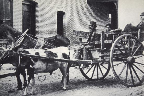 Mark Twain, American author, in the back of a horse and ox drawn cart, c1900-Unknown-Photographic Print