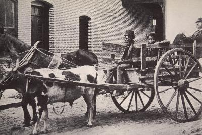 Mark Twain in the Back of a Horse and Ox Drawn Cart, Turn of the Century--Photographic Print