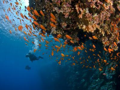 Wreck of Numidia, Big Brother Island