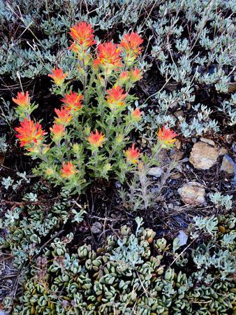 Miniature Garden at Gem Lake, Ansel Adams Wilderness, California, USA
