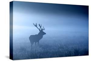 Blue Mist by MarkBridger