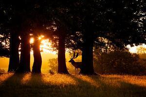 Dawn by MarkBridger
