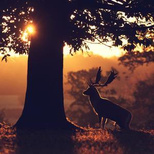 Rimlight by MarkBridger