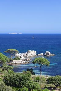 Beach of Palombaggia, Corsica, France, Mediterranean, Europe by Markus Lange