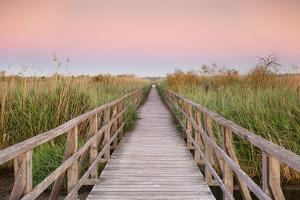 Boardwalk at sunrise, Federsee Lake, Nature reserve, Bad Buchau, Upper Swabia, Baden-Wurttemberg, G by Markus Lange