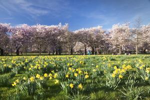 Cherry Blossom and Narcissi Blossom, Palace Garden, Schloss Schwetzingen Palace by Markus Lange