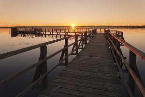 Federsee Lake at sunrise, Nature reserve, Bad Buchau, Upper Swabia, Baden-Wurttemberg, Germany, Eur by Markus Lange