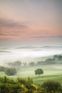 Single Tree at Sunrise by Markus Lange