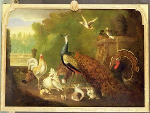 A Peacock, Turkey and Other Birds in an Ornamental Garden by Marmaduke Cradock