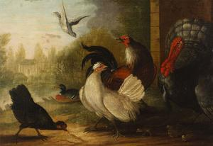 A Turkey, a Duck and Poultry in an Ornamental Garden by Marmaduke Cradock