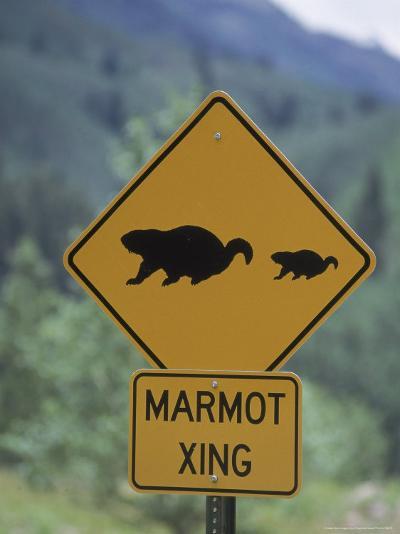 Marmot Crossing Sign, Aspen, CO-Cheyenne Rouse-Photographic Print