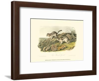 Marmot Squirrel-John James Audubon-Framed Art Print