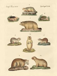 Marmots and Moles