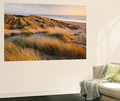 Marram Grass on the Sand Dunes of Braunton Burrows, Looking Towards Saunton Sands, Devon-Adam Burton-Wall Mural