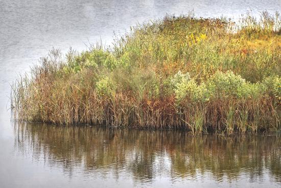 Marsh 2-Lillis Werder-Premium Photographic Print