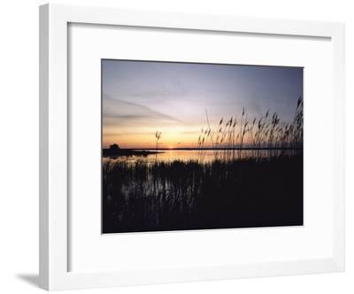 Marsh Grasses and Sunset-Medford Taylor-Framed Photographic Print