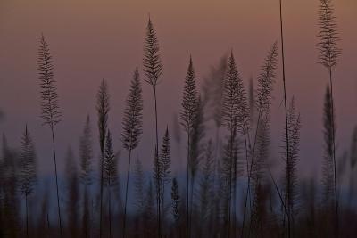 Marsh Grasses In Kaziranga National Park-Steve Winter-Photographic Print