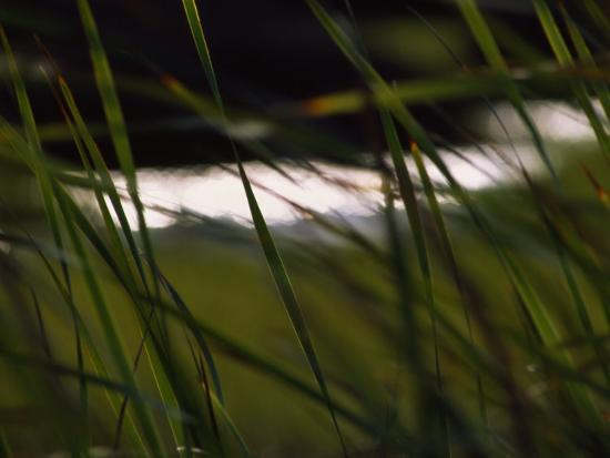 Marsh Grasses Sway in the Breeze with Water in the Background-Brian Gordon Green-Photographic Print