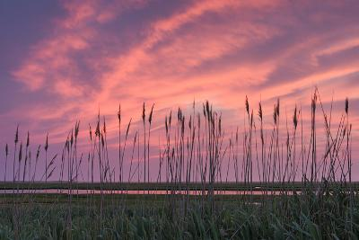 Marsh Reeds-Michael Blanchette Photography-Photographic Print