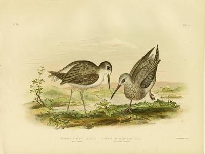 https://imgc.artprintimages.com/img/print/marsh-sandpiper-1891_u-l-pulwkt0.jpg?p=0