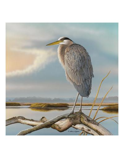 Marsh Watch - Great Blue Heron-Richard Clifton-Art Print