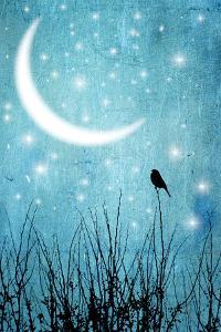 Moonlight Sonata by Marta Nardini