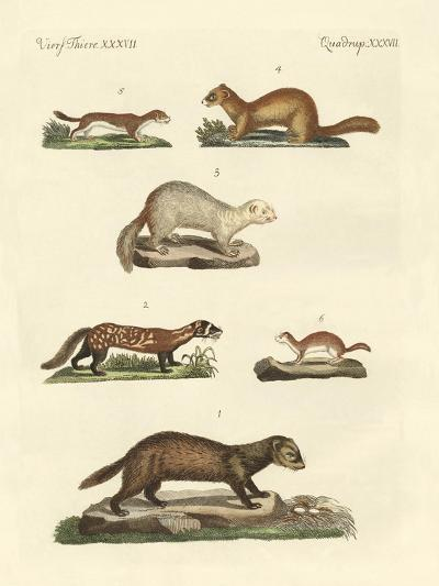Martens and Weasel--Giclee Print