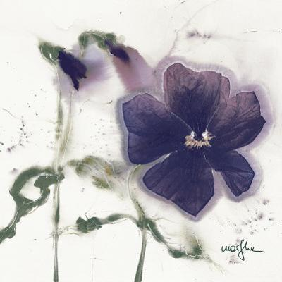 Pansies V by Marthe