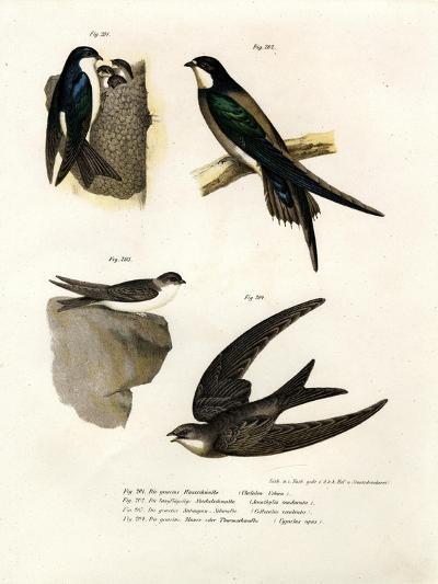 Martin, 1864--Giclee Print