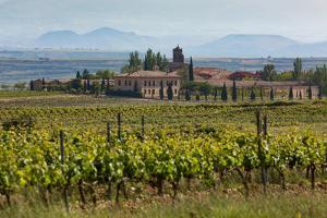 Idyllic Vineyard in La Rioja, Spain, Europe by Martin Child