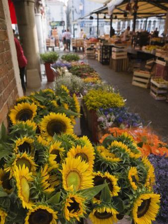 Sunflowers for Sale in Rialto Market, Venice, Veneto, Italy, Europe