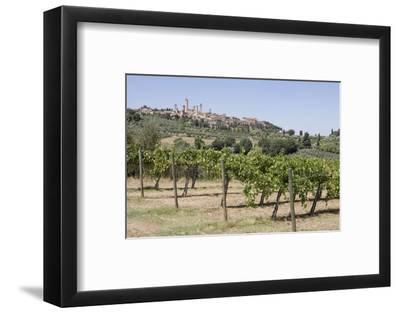 Vineyard with San Gimignano in Background, Tuscany, Italy
