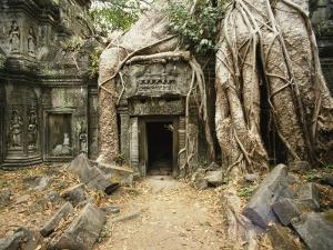 Giant Strangler Fig Tree Roots Embrace the Crumbling Ta Prohm Temple by Martin Gray