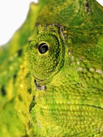 Eyes of a Meller's Chameleon