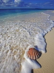 Scallop Shell in the Surf by Martin Harvey