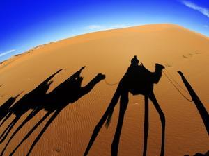 Shadows of Camels by Martin Harvey