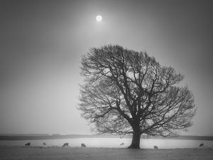 Evening Light II by Martin Henson