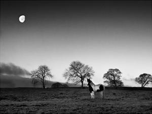 Evening Light IV by Martin Henson