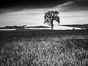 Field Texture by Martin Henson